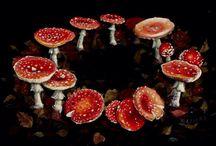 Magical Mushroom Love