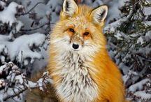 Zvířátka-louky,lesy