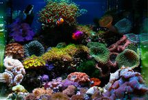 Reef Aquarium / Ideas for reef aquascapes and new fish to add as we start over with our saltwater aquarium / by Miranda Hayden
