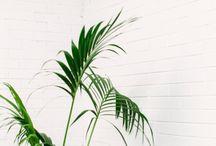Planteønsker