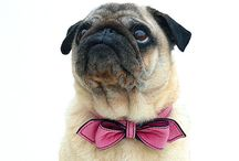 Pugs, Jugs and other cuties, cats, too! / by Stephanie HicksNeunert