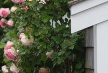 fleurs et plantes balcon