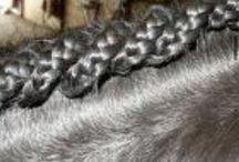 horses hair