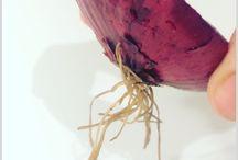 Regrow Food // Kitchen scrap gardening