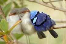 birds / birds in flight, beautiful birds, bird art inspiration / by Bonnie Lecat Designs