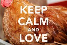 Love chicks / Chicken