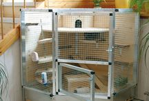 Cage Setups / As a previous caretaker of rats, I love seeing the different cage styles.