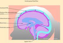 cranio sacral