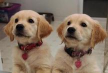 Dogs / by Kayla Bailey