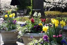 Spring Containers / Inspiration for containers that announce spring has arrived!