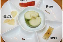 Science projects (preschool)