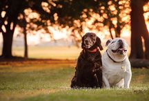 Portraits of Life / Portraits can be of newborns to families to pets.  We love them all / by Trawick Images, Inc