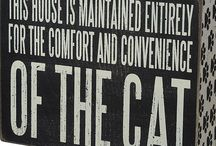 Katten / Cats