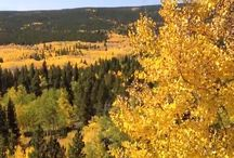 Fall in Colorado / Beautiful places in Colorado in the fall; fall leaves