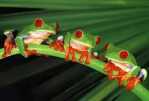 Frogs and dogs / by Judy Lansdell