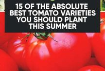 Verity's of tomatoes
