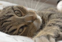 cat care / ideas for caring for and loving your cat