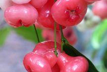 meyve turleri