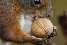 Animals & walnuts