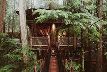 Rüyalarımızı süsleyen ağaç evler