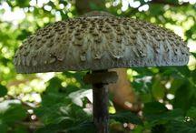 Shroomshapes / Mushrooms, fungus