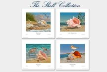 """LIMITED TIME SALE! /  Take 17% OFF the Open Edition of Robert Dance's new print set """"The Shell Collection"""". This print set makes a great #gift for any #shell enthusiast for the #holidays! Click this link to order!: http://stuartdance.com/shellcollectionSSD17.html"""