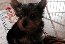 My dog / My puppy Georgia