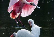 Bird, kuşlar
