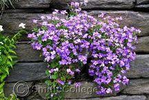 Walled Garden - Inner South Wall