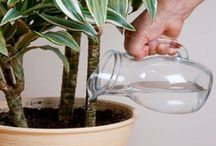 péče o rostliny
