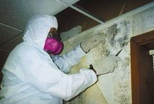 MoldPedia / Information and resources about Mold removal and cleanup from your house