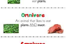 carnivore,omnivore, herbivore