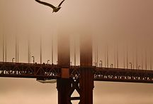 Cities - San Francisco / by Andrew Abranches
