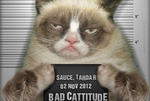 CAT-itude / by Malinda Dean