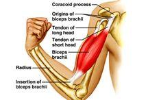 Anatomy/Biomechanics