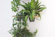Indoor plants. / Nice green ones.