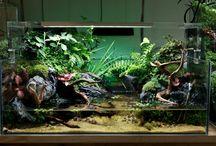 Glass boxes / Vivariums, terrariums, fish tanks, paladriums