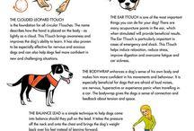 Hund / Hunderelaterte funn