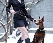 Dobermans and Fashion; Dobes and the Stars; In the Movies