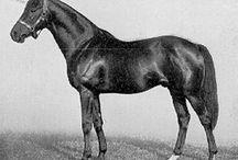 Racehorse Conformation Shots