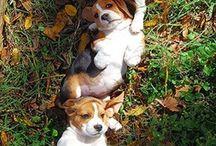 Cachorros!