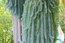 Giardino piante