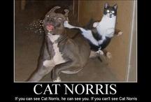 Chuck Norris / by Becca J. Jackson