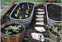 garden's & vegi patch