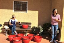 La Vendemmia in Maremma - The grape harvest in Maremma / La vendemmia. Un'esperienza sensoriale profonda. #OasiMaremma