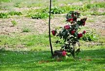 Nature, Gardening and Flowers