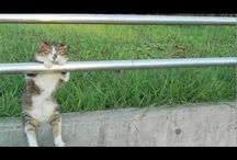 LOL: Cats / Cats do the darndest things!