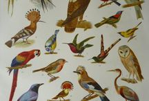 Vintage Bird Art / Vintage and antique prints of birds, their nests and eggs.