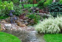 Ponds / Backyard water features