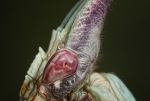 E.T. INSECTOS